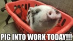 Pig Into Work Today!!!
