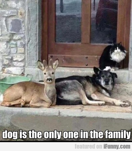 Dog Is The Only One In The Family