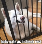 Baby Gate As A Cheek Rest