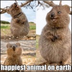 Happiest Animal On Earth
