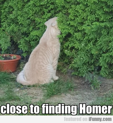 close to finding Homer