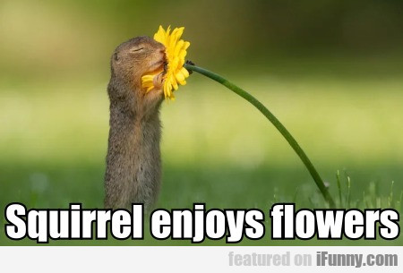 Squirrel Enjoys Flowers
