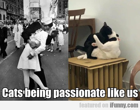 Cats Being Passionate Like Us