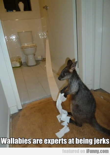 Wallabies Are Experts At Being Jerks