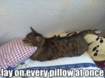 Lay On Every Pillow At Once