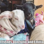 Friends Don Julio And Emilia