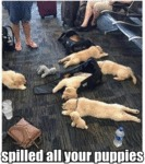 Spilled All Your Puppies