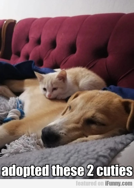 adopted these 2 cuties