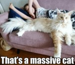 That's A Massive Cat