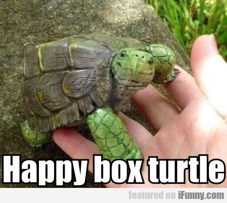 Happy Box Turtle