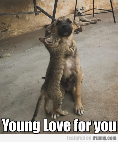 Young Love for you