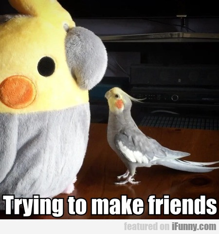 Trying to make friends