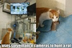 Uses Surveillance Cameras To Hunt A Rat