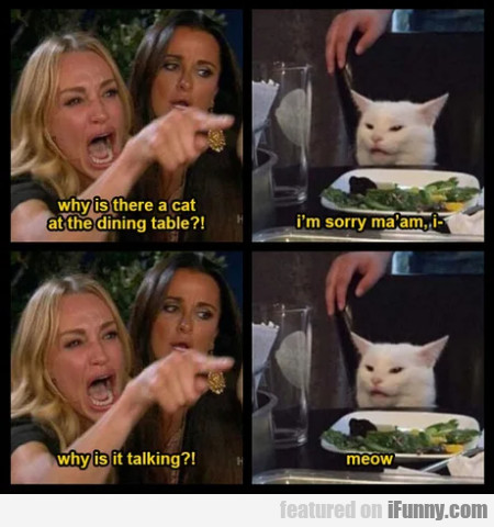 Why is there a cat at the dining table - I'm sorry