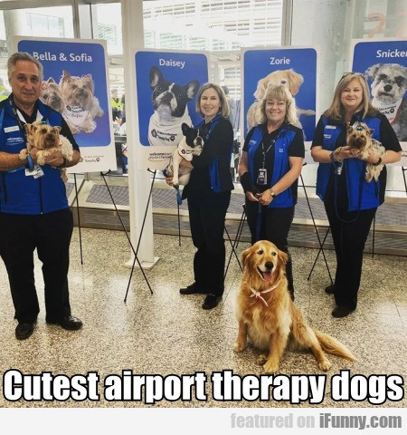 Cutest Airport Therapy Dogs