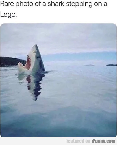 Rare Photo Of A Shark Stepping On A Lego