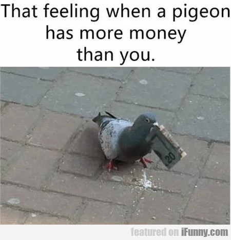 That feeling when a pigeon has more money than you
