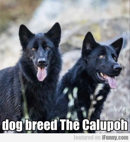 Dog Breed The Calupoh