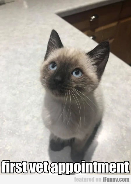 First Vet Appointment
