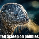 Fell Asleep On Pebbles