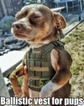 Ballistic Vest For Pups