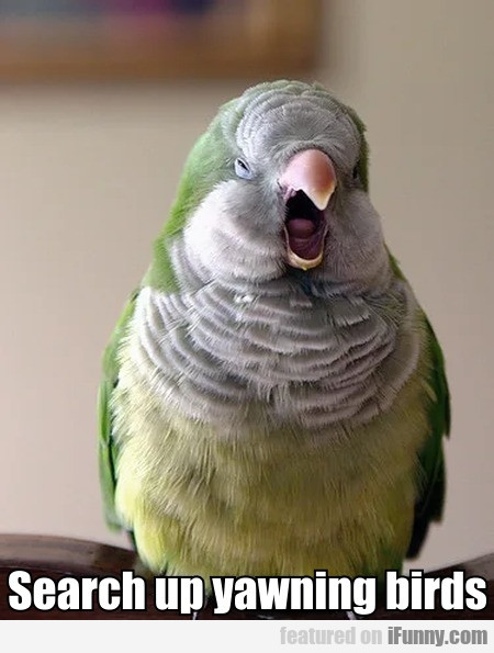 Search Up Yawning Birds