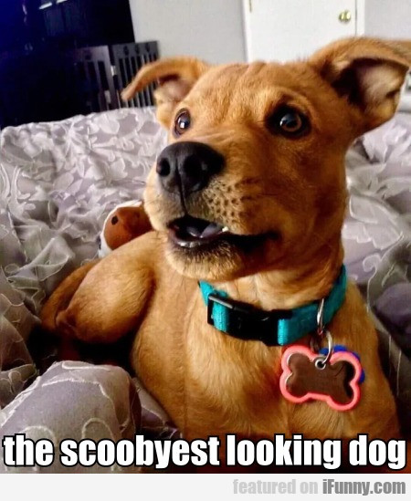 the scoobyest looking dog