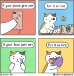 If Your Phone Gets Wet Put It In Rice