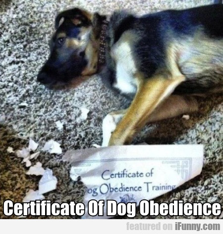 Certificate Of Dog Obedience